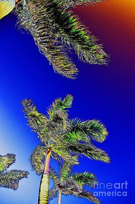 Photograph - Palms by Don Youngclaus