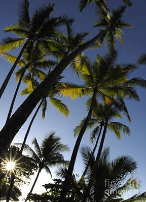 Photograph - Palms In Costa Rica by Bob Christopher
