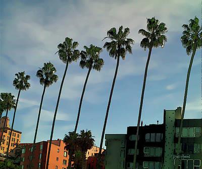 Palms In La Jolla Original