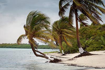 Photograph - Windblown Palms by Jean Noren