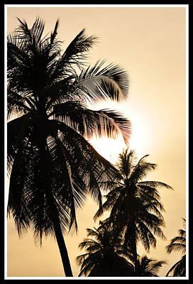 Palms Art Print by Mark Britten