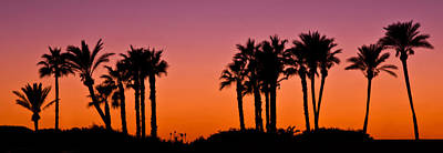 Photograph - Palms Silhouettes At Sunset by Nadya Ost