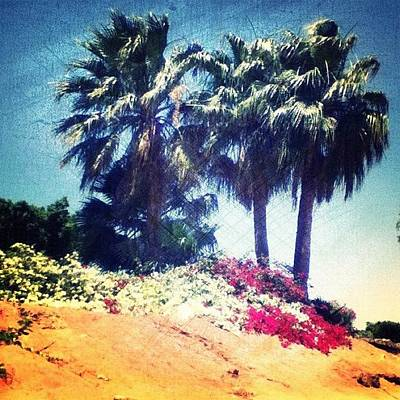 #palms #trees #beach #webstagram Art Print by Andrea Bigiarini
