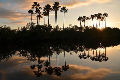 Photograph - Palms Way by Amanda Vouglas