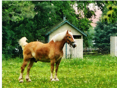 Photograph - Palomino In Pasture by Susan Savad