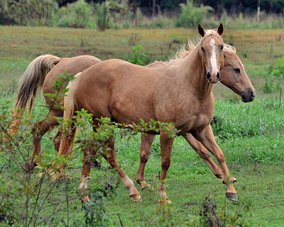 Palomino Photograph - Palomino Mother And Daughter Together - 51007067d by Paul Lyndon Phillips