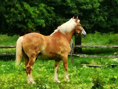 Photograph - Palomino Walking Away by Susan Savad