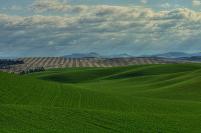 Photograph - Palouse Spring Morning by Dan Mihai