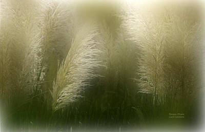 Pampas Dream Art Print by Carol Cavalaris