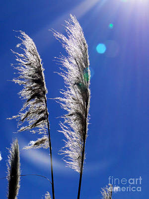 Pampas Grass II Art Print by Al Bourassa