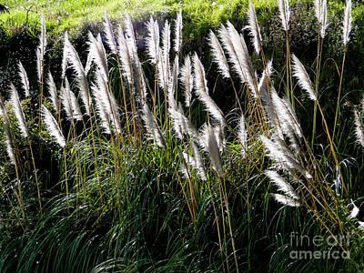 Pampas Grass Photograph - Pampas Grass IIi by Al Bourassa