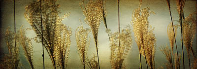 Pampas Grass Panoramic Art Print by Amy Tyler