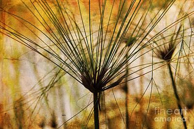 Pampas Grass Photograph - Pampas Grass by Susanne Van Hulst