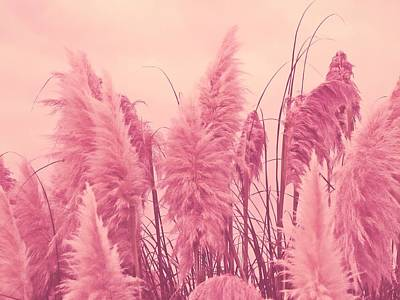 Pampus Photograph - Pampas Pink by Sharon Lisa Clarke