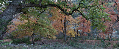 Photograph - Panorama Of Fall Colors At Lost Maples by James Woody