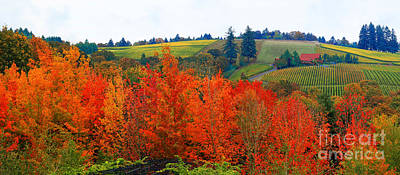 Panorama Of The Red Hills Of Dundee Oregon Art Print by Margaret Hood