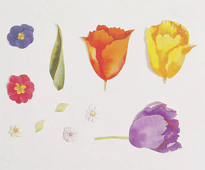 Pansies And Tulips Art Print by Digital Vision.