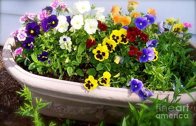 Photograph - Pansies In A Pot by Nancy Patterson