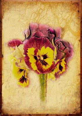 Pansy Art Print by Margaret Hormann Bfa