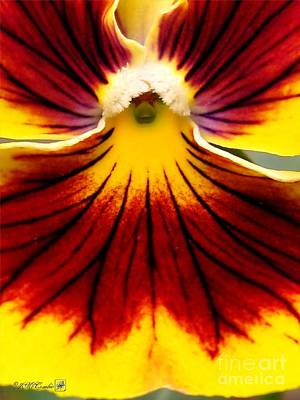 Art Print featuring the photograph Pansy Named Imperial Gold Princess by J McCombie