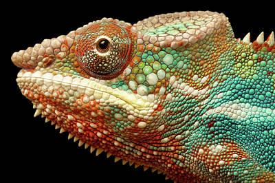 Panther Chameleon Art Print by MarkBridger
