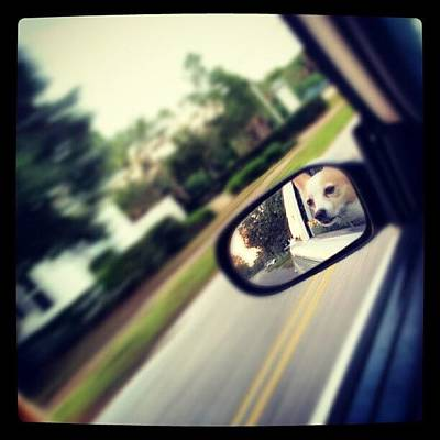 Cars Photograph - Papa ! by Mandy Shupp