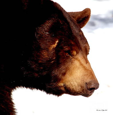 Photograph - Papa Bear by Christine S Zipps
