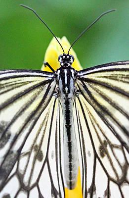 Becky Photograph - Paper Kite Closeup by Becky Lodes