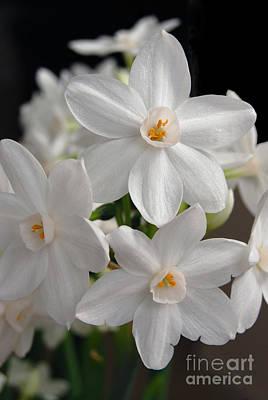 Epic Digital Art - Paperwhite Narcissus Flower by Eva Kaufman