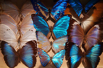 Photograph - Papillon by Tim Nichols