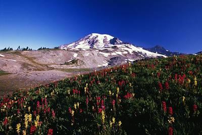 Mans Best Friend - Paradise Park Valley, Mount Rainier by Natural Selection Craig Tuttle
