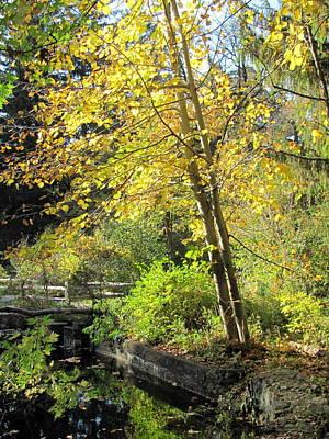 Photograph - Paradise Springs Birch Trees by Anita Burgermeister