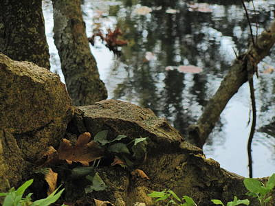 Photograph - Paradise Springs Reflections by Anita Burgermeister