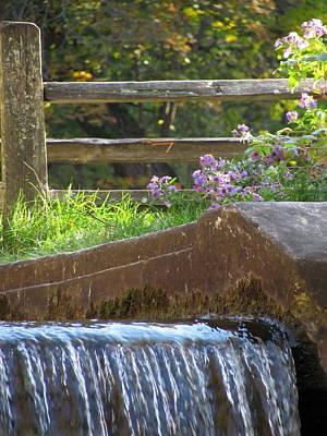 Photograph - Paradise Springs Waterfall 1 by Anita Burgermeister