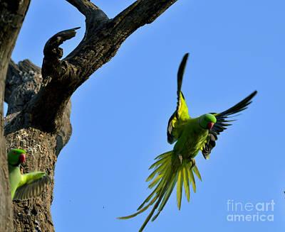 Parakeet Digital Art - Parakeet In The Air by Pravine Chester