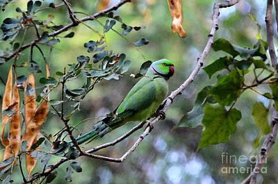 Parakeet Digital Art - Parakeet Resting by Pravine Chester