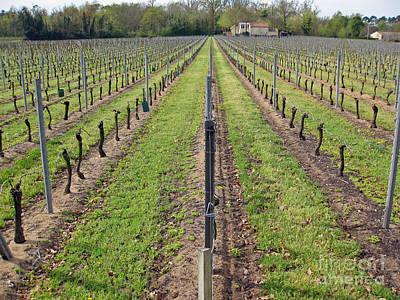 Caberet Photograph - Parallel Vines by Rod Jones