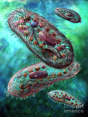 Biological Digital Art - Paramecium by Russell Kightley