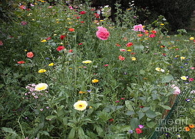 Photograph - Parc Monceau Wildflowers by Carol Groenen