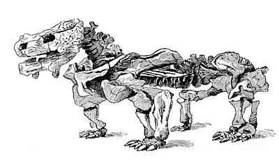 Pareiasaurus, Cenozoic Reptile Art Print by Science Source
