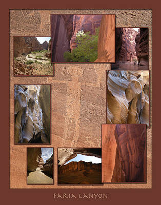 Photograph - Paria Canyon Poster by John Farley