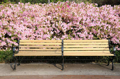 Art Print featuring the photograph Park Bench And Azaleas by Bradford Martin