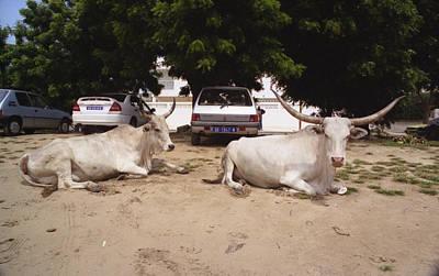 Photograph - Parking Attendants Dakar Senegal by Wayne King