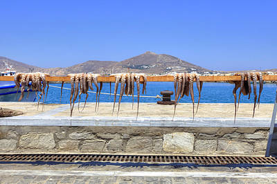 Squids Photograph - Paros - Cyclades - Greece by Joana Kruse
