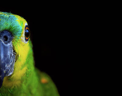 Parrot Art Print by by Marcio Anderson