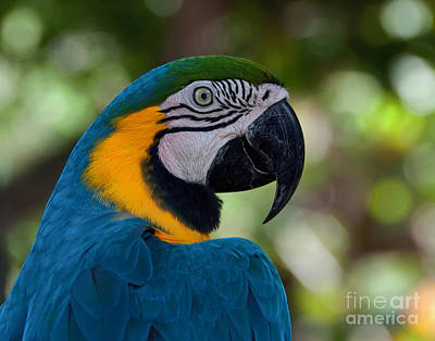Art Print featuring the photograph Parrot Head by Art Whitton