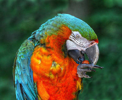 Parrot Head Art Print