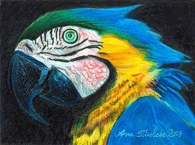 Print featuring the drawing Parrot Miniature by Ana Tirolese