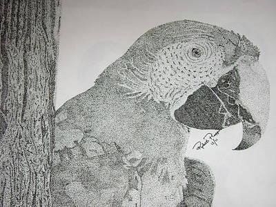 Parrot Art Print by Robert Plopper
