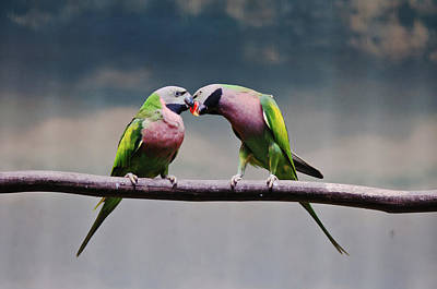 Wild Parrots Photograph - Parrots by Ngkokkeong Photography